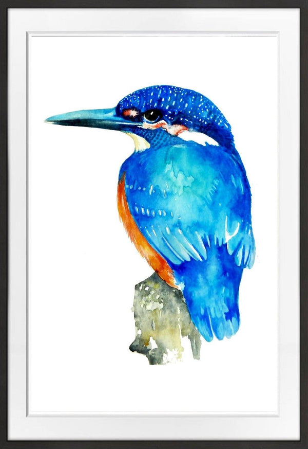 Malachite Kingfisher Prints Prints for Conservation