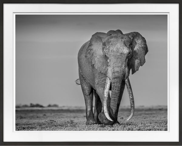 One Of The Last Of His Kind Prints Prints for Conservation