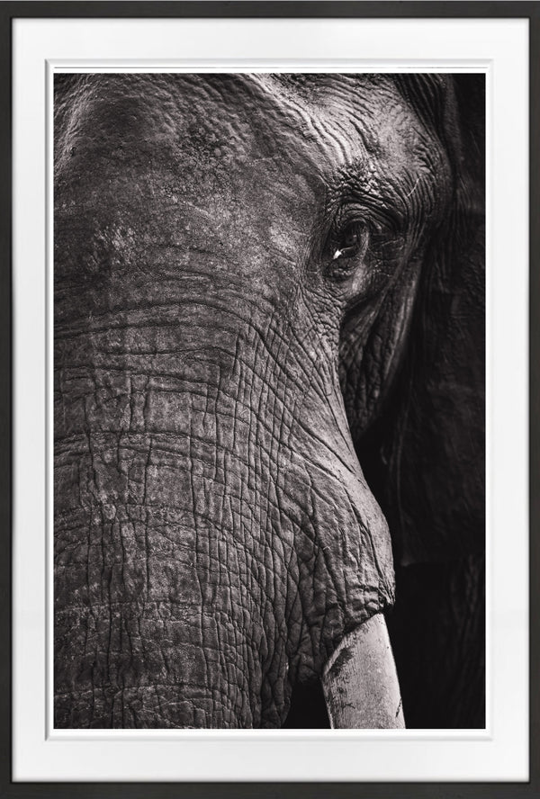 Tembo Prints for Conservation