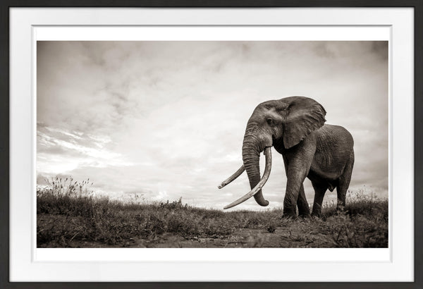 Timeless Prints Prints for Conservation
