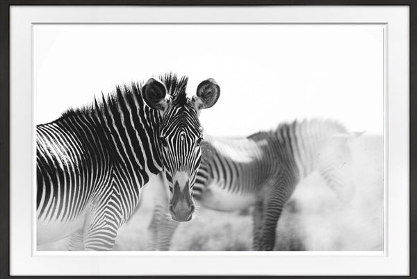 Zebra Crossing Prints Prints for Conservation