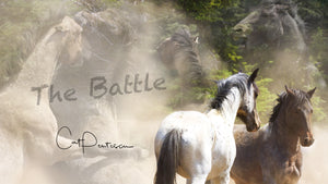 Wild Horses Battle in the Pryor Mountains, Photography and design by Cat Pentescu