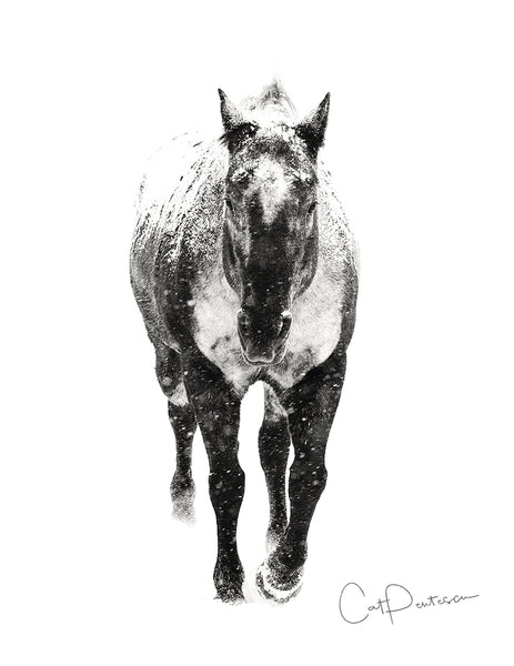 Appaloosa Snow - Note Cards