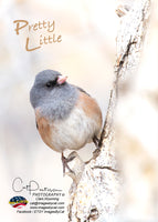 PRETTY LITTLE - Greeting Card