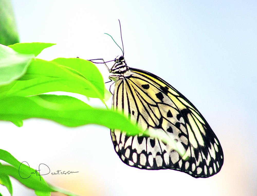 Note Cards - BUTTERFLY BEAUTIFUL