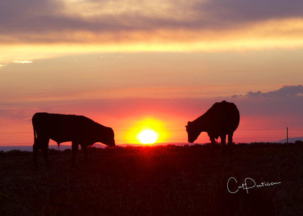 GRAZING SUNSET - Greeting Card