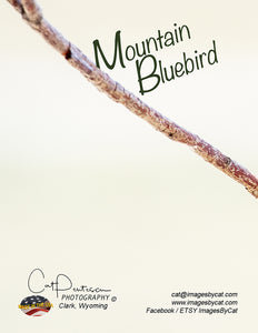 Note Cards - MOUNTAIN BLUEBIRD