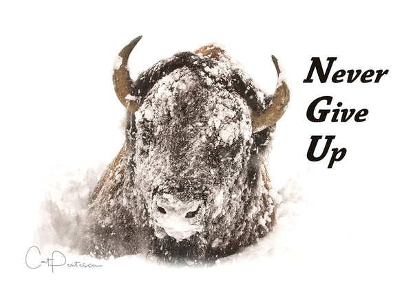 Greeting Card - NEVER GIVE UP
