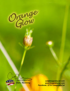 Note Cards - ORANGE GLOW