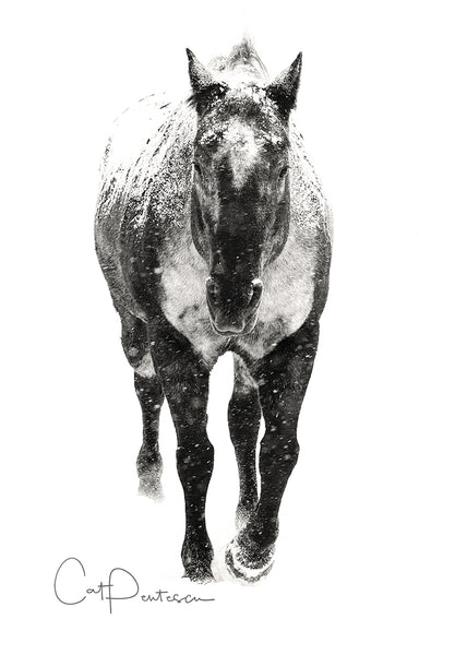 APPALOOSA SNOW - Greeting Card