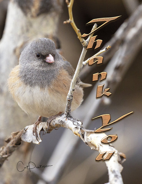 Note Cards - JUNCO PUFF - Thank You
