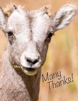Note Cards - LITTLE BIGHORN ~ Thank You Cards