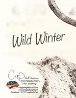 WILD WINTER - Note Cards