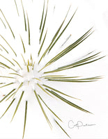 Note Cards - YUCCA SNOW