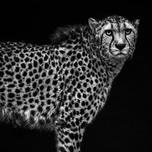 Load image into Gallery viewer, Cheetah Youth