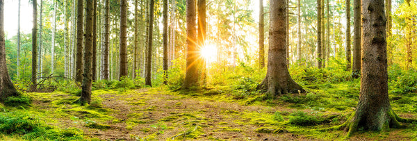 How Forest Bathing can reduce stress