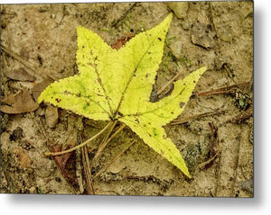 The Yellow Leaf - Metal Print