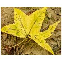 Load image into Gallery viewer, The Yellow Leaf Posters