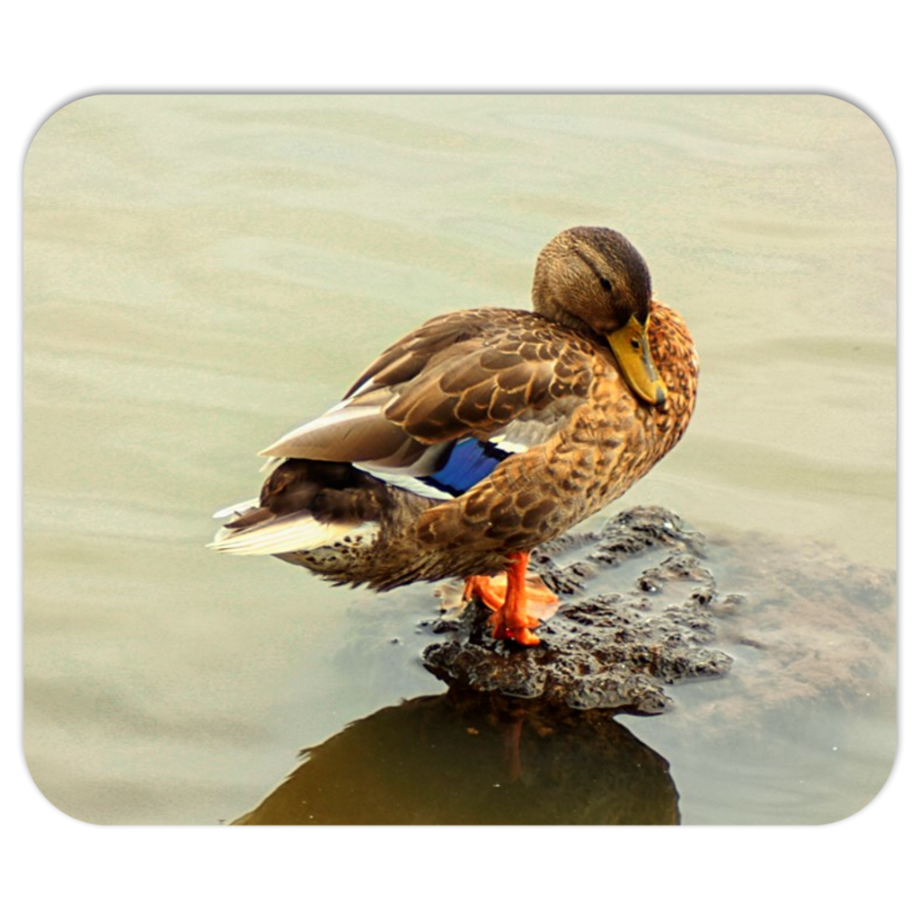 The Mallard Duck Mousepads