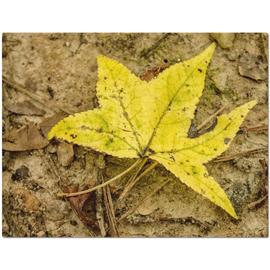 Yellow Leaf Placemats