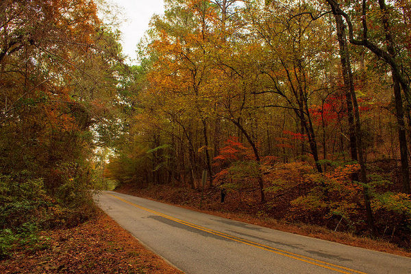 Fall On A County Road - Art Print