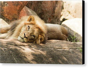 I'm Leo The Lion - Canvas Print