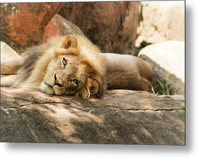 I'm Leo The Lion - Metal Print