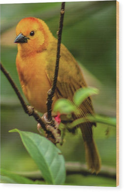 Portrait of a Yellow Bird - Wood Print