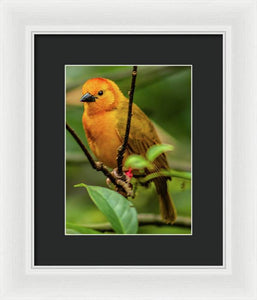Portrait of a Yellow Bird - Framed Print