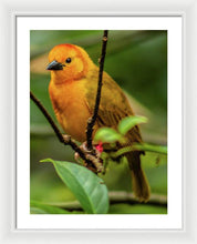 Load image into Gallery viewer, Portrait of a Yellow Bird - Framed Print