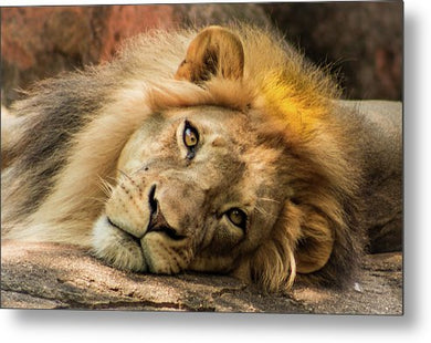 Portrait of Leo - Metal Print
