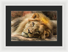 Load image into Gallery viewer, Portrait of Leo - Framed Print