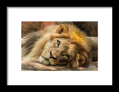 Portrait of Leo - Framed Print