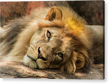 Load image into Gallery viewer, Portrait of Leo - Acrylic Print
