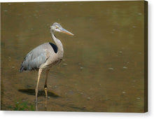 Load image into Gallery viewer, The Blue Heron - Canvas Print