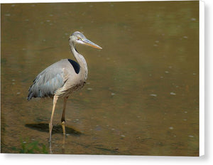 The Blue Heron - Canvas Print