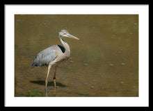 Load image into Gallery viewer, The Blue Heron - Framed Print
