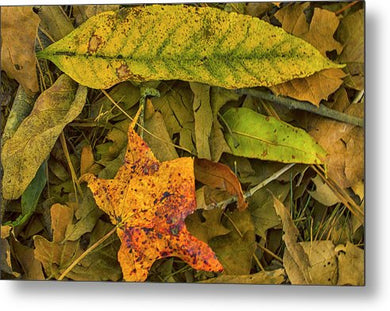 The Fall Abstract - Metal Print