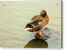 Load image into Gallery viewer, The Mallard Duck - Acrylic Print