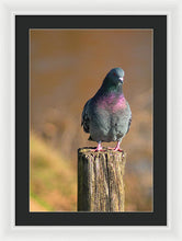 Load image into Gallery viewer, The Pigeon On The Post - Framed Print