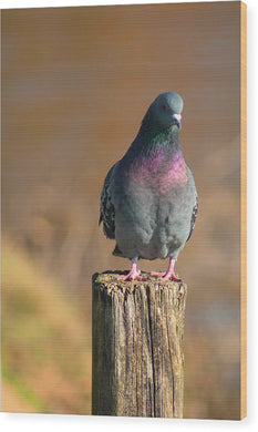 The Pigeon On The Post - Wood Print