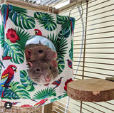 Rainforest Rat Hammock Set