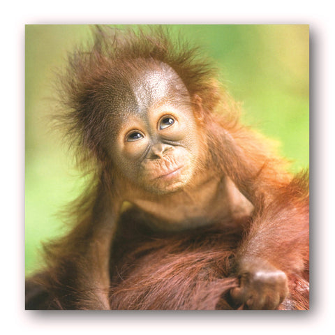 Baby Orangutan Greetings Card from Dormouse Cards