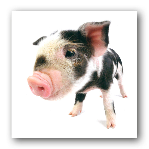 Kune Kune Piglet Birthday Greetings Card buy online from Dormouse Cards