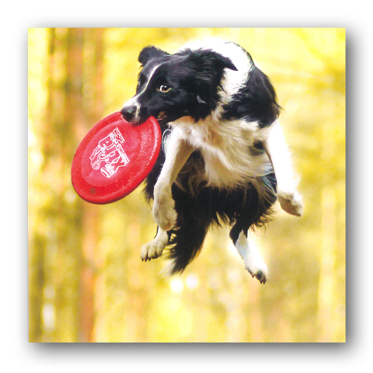 Funny Sheepdog Border Collie Birthday Greetings Card from Dormouse Cards