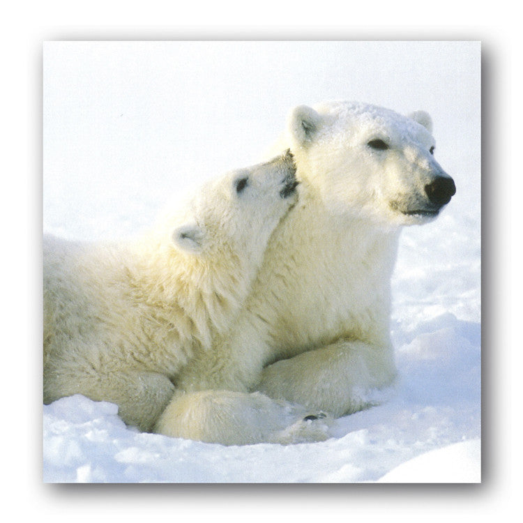 Christmas Card - Polar Bears from Dormouse Cards