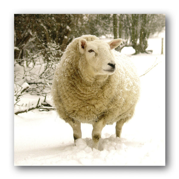 Christmas Card - Sheep in Snow