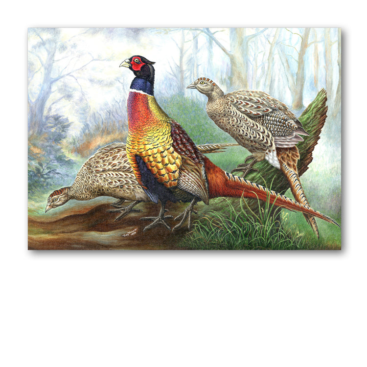 Pheasant Greetings Card from Dormouse Cards