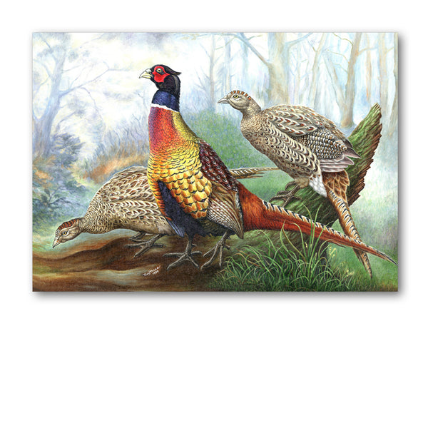 Pack of 10 Pheasant Postcards from Dormouse Cards