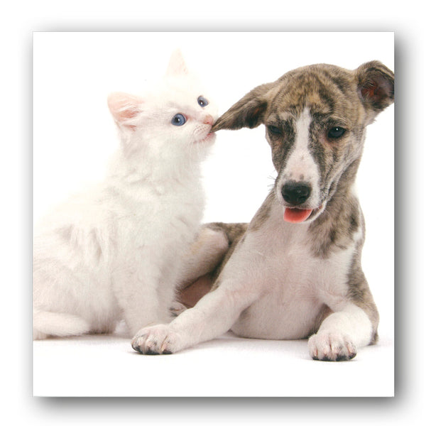Funny Whippet and Kitten Birthday and Greetings Card buy online from Dormouse Cards
